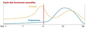 schema-cycle-hormones-sexuelles
