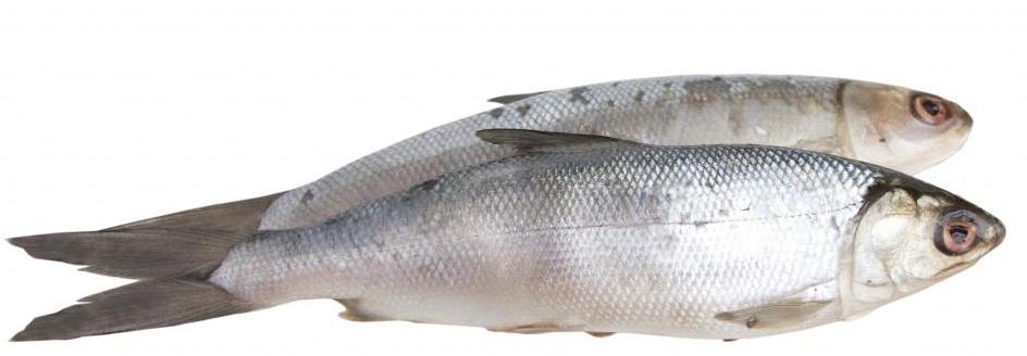 sardins